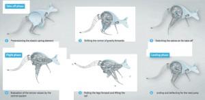 توضيح لحركية الكنغرو أثناء عملية القفز  المصدر: شركة فيستو